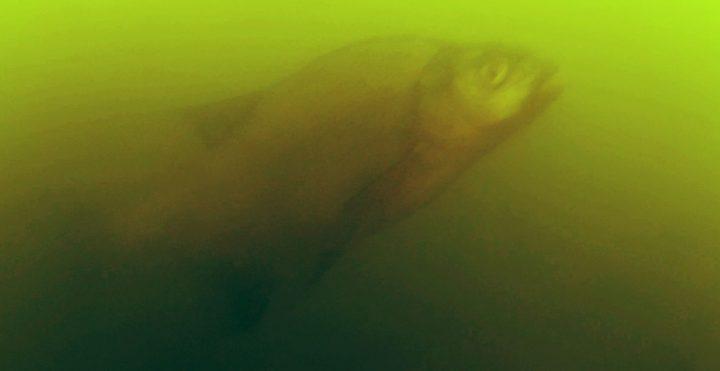Kamera podwodna